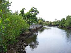 Photo of waterway behind Island City Park Preserve