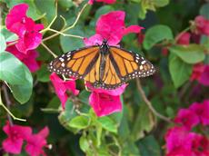 Photo of butterfly at Donn Eisele Park